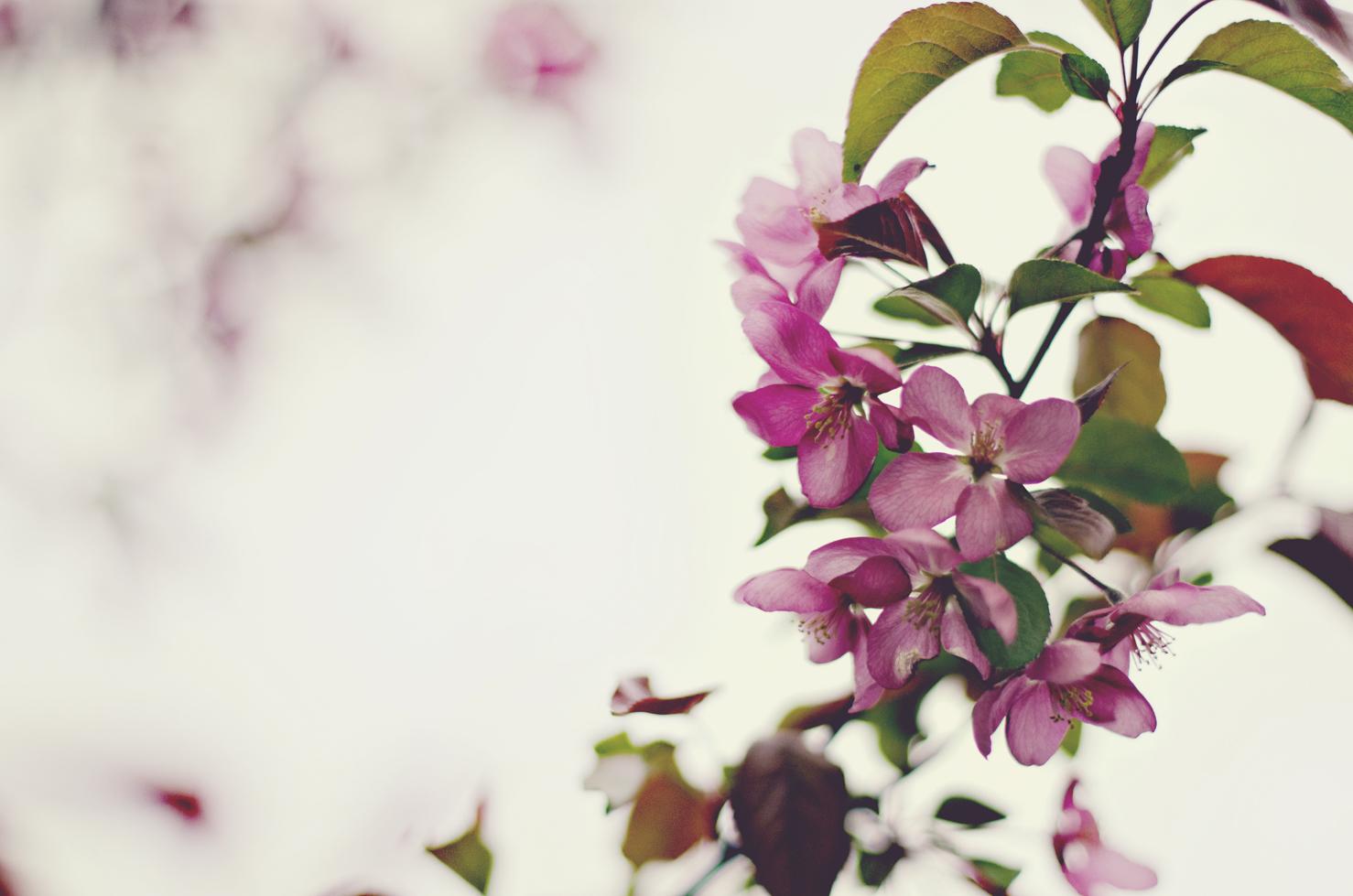 spring20120329_0047.jpg