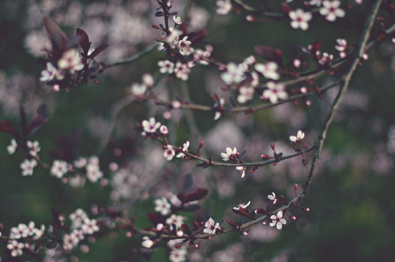 spring20120328_0029.jpg
