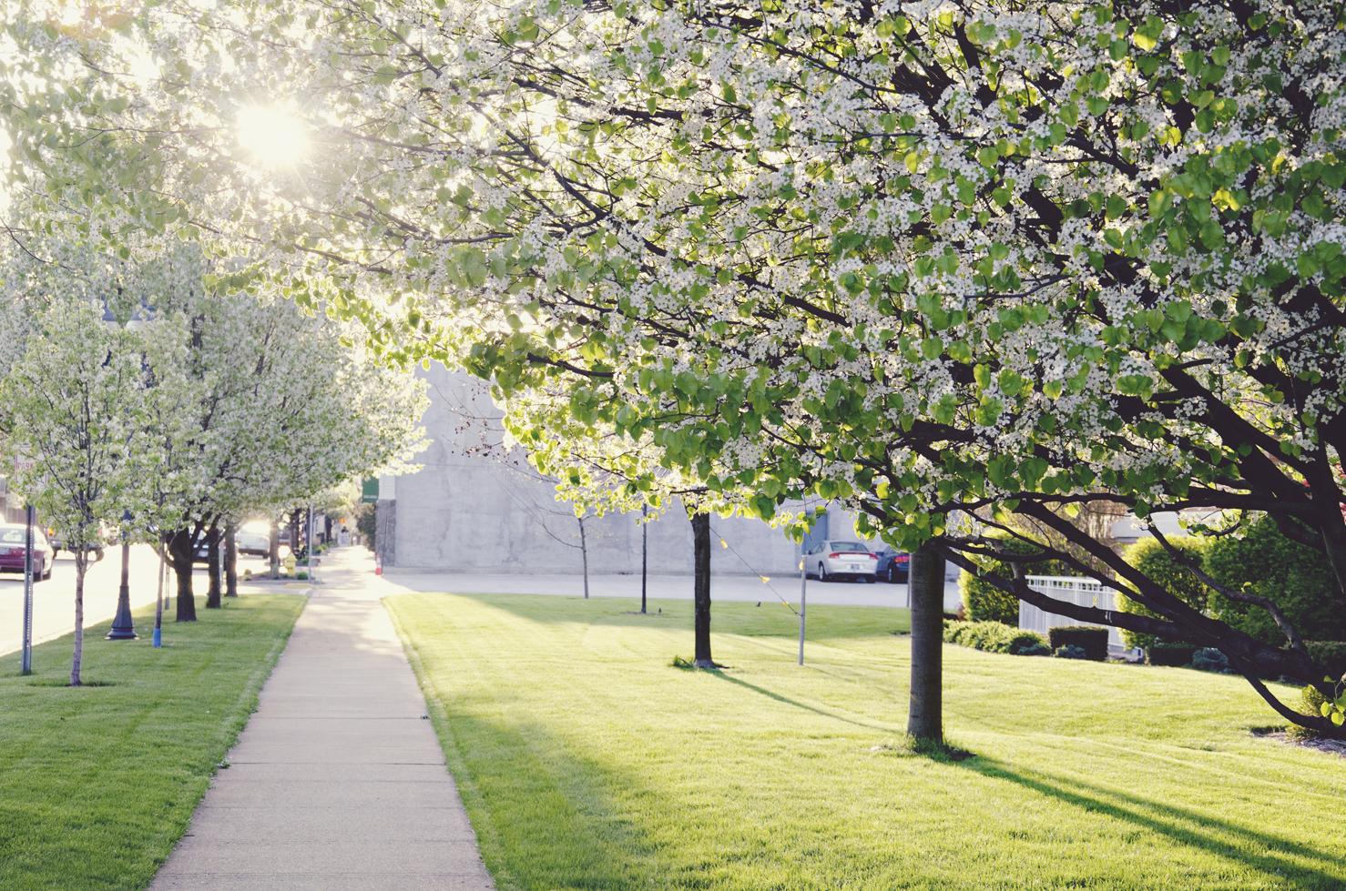 spring20120329_0032.jpg