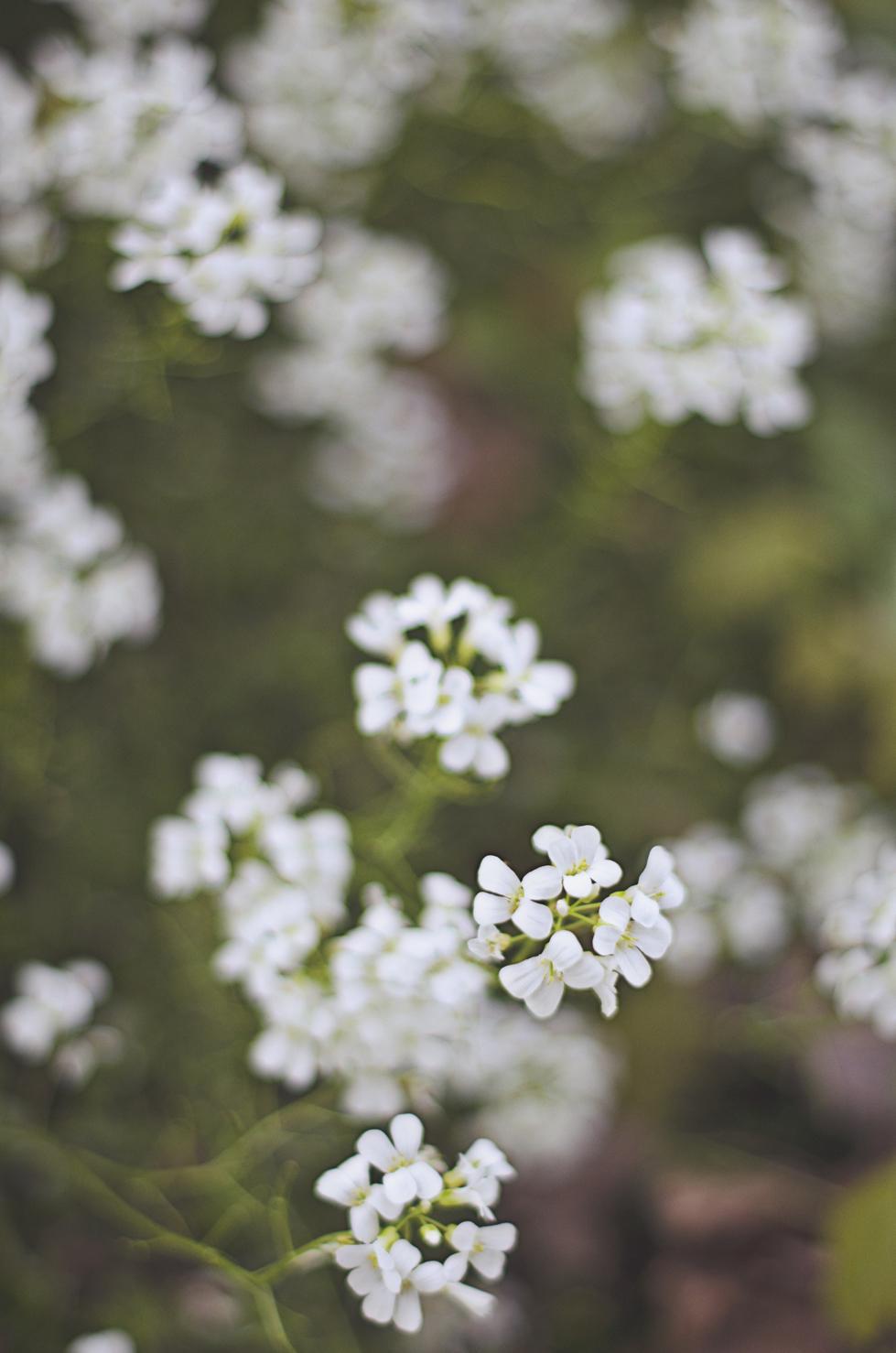 spring20120329_0041.jpg