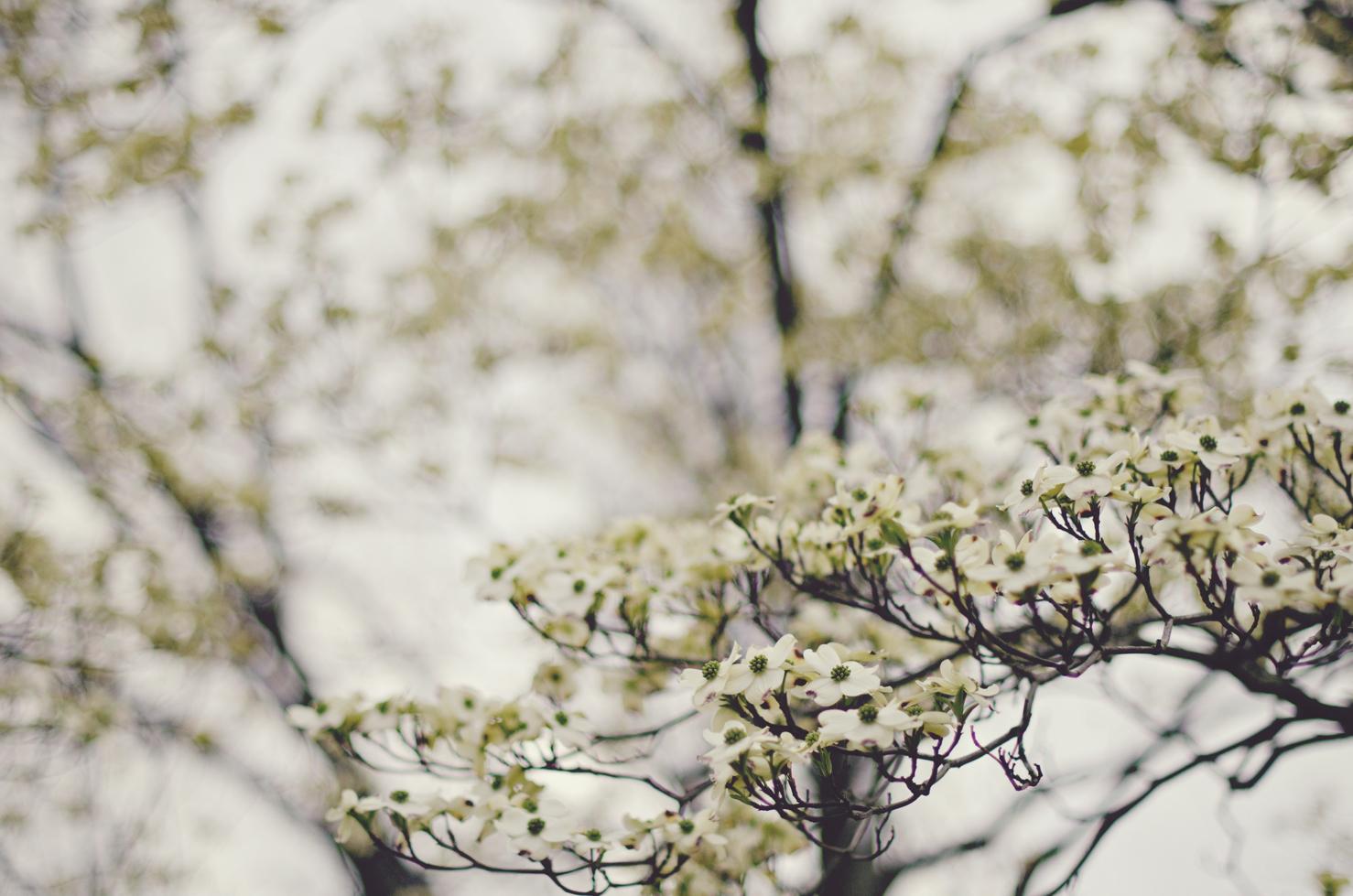 spring20120329_0049.jpg