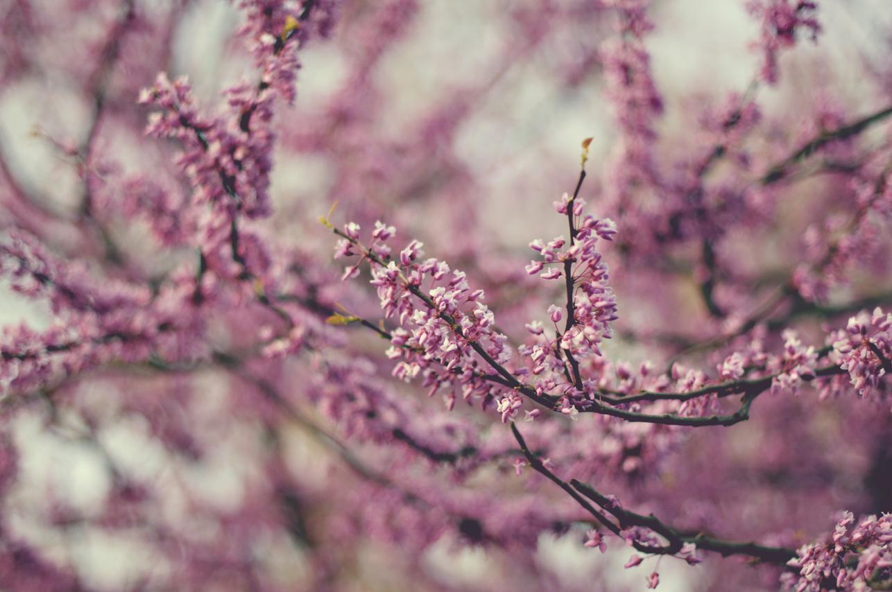 spring20120328_0026.jpg