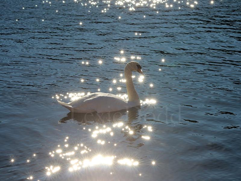 Glittering Swan.jpg