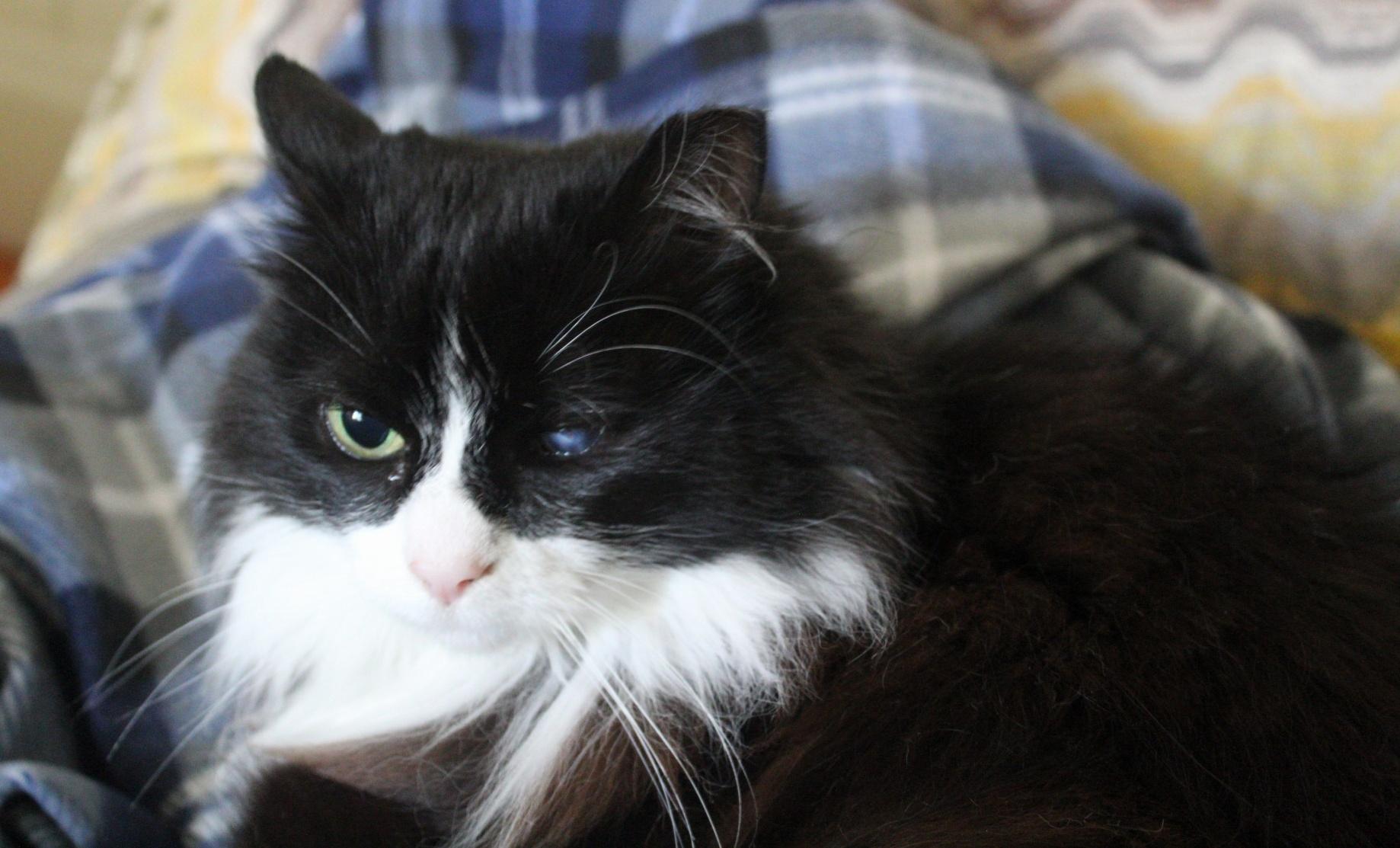 mo-cat-parsnip-2.jpg