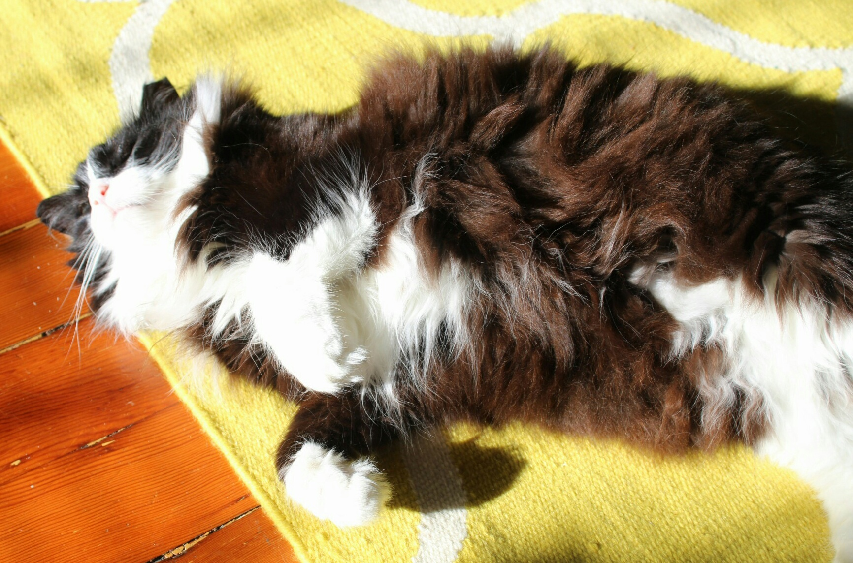 mo-cat-parsnip-3.jpg