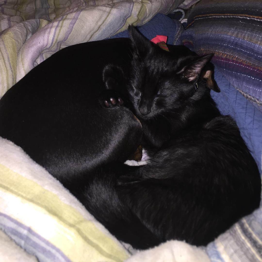 mary-veiled-reckoner-cat-dog-max-penny-1.jpg