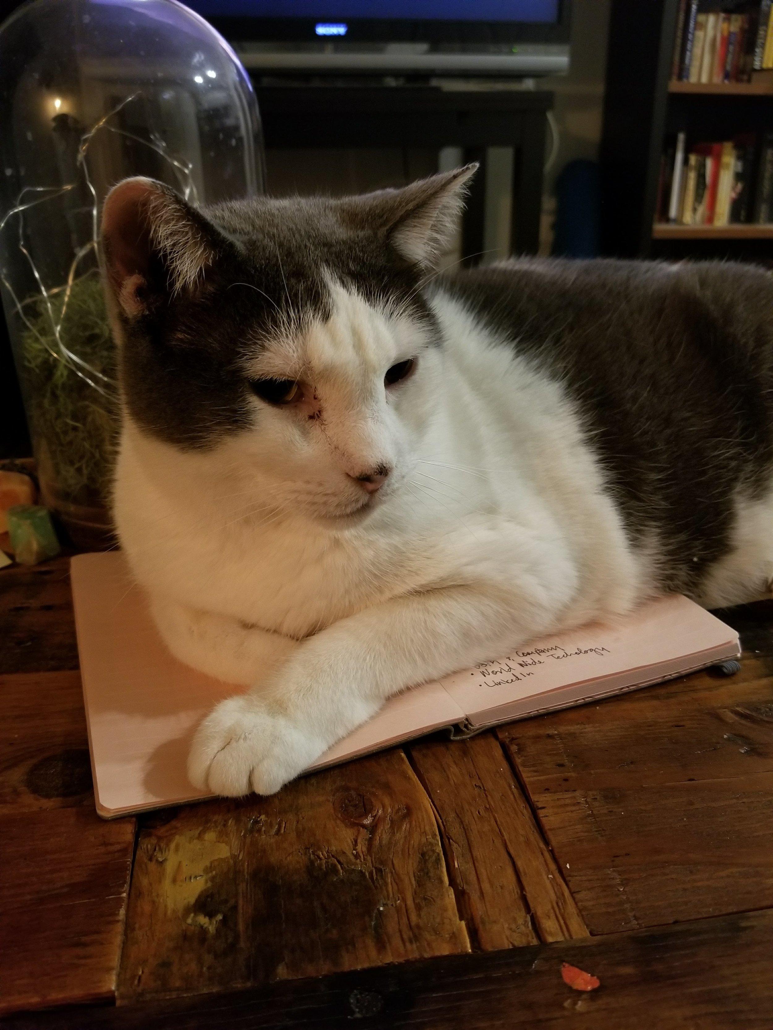 rubius-rascal-cat-leelo-muffinbutt-4.jpg
