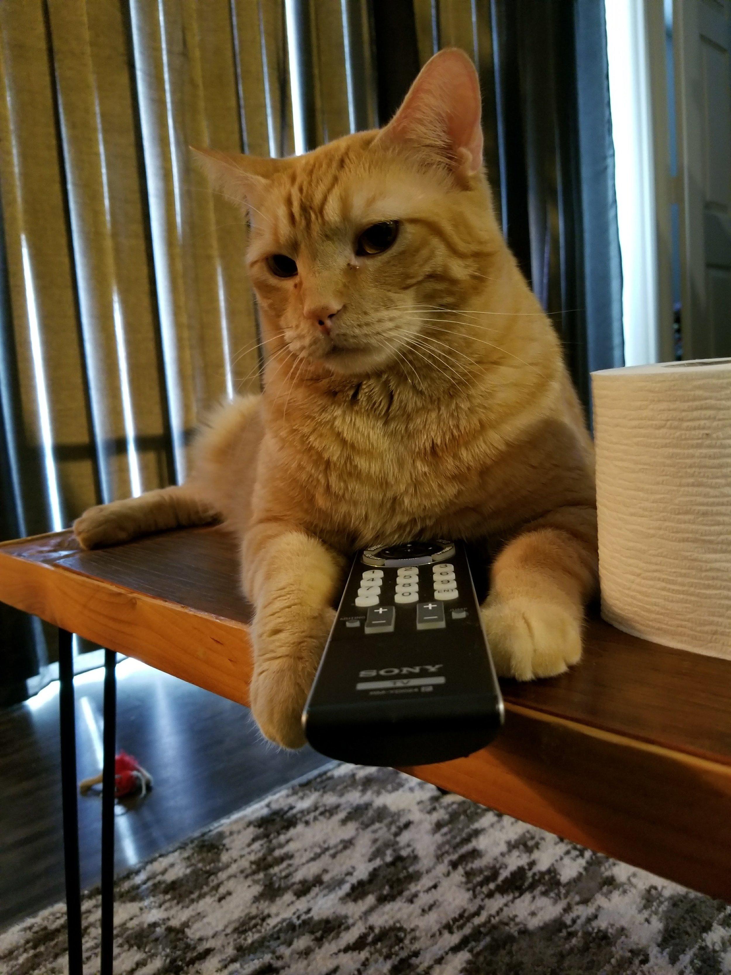 rubius-rascal-cat-angus-mcfluffington-3.jpg