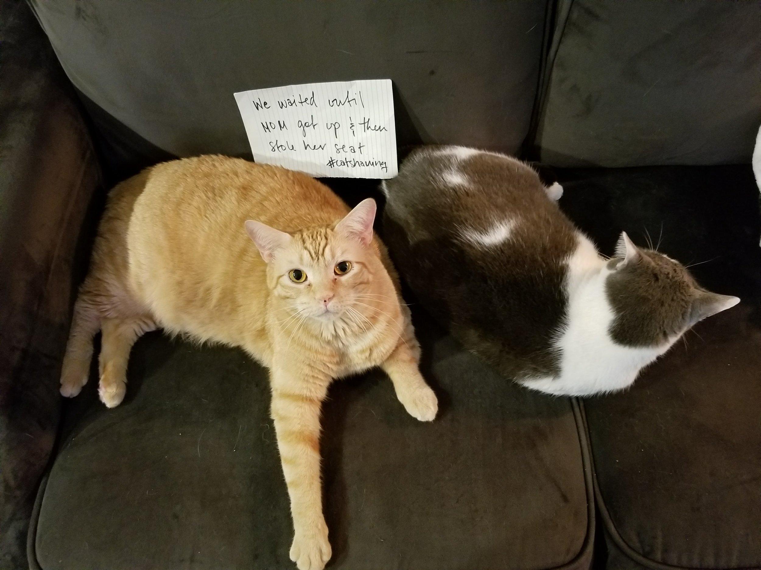 rubius-rascal-cat-angus-mcfluffington-leelo-muffinbutt-2.jpg