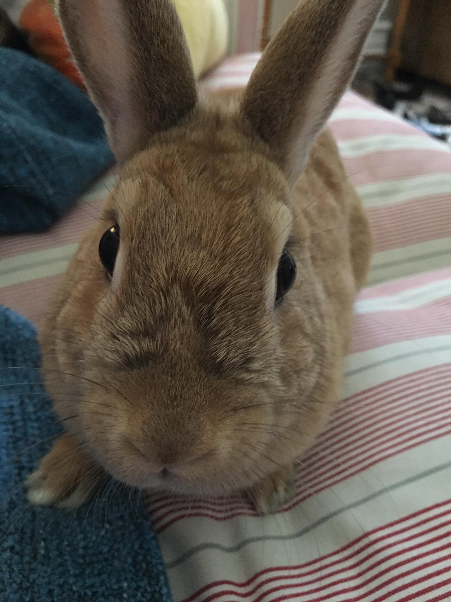 silnia-shearfang-bunny-penny-1.jpeg