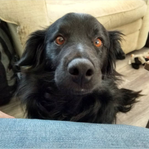 ulkala-crimsonclaw-dog-digby-1.png