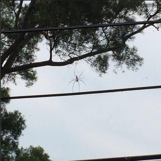 giant_tree_Spider.jpg