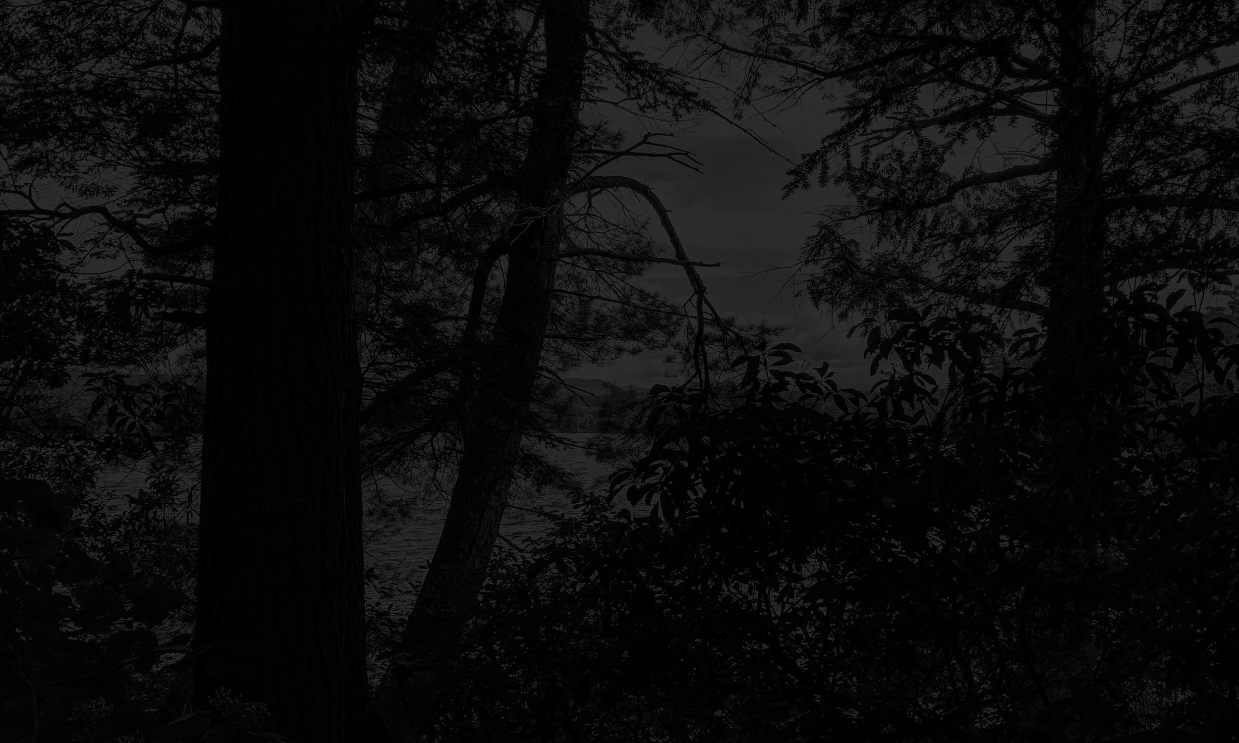 gothic guitar forest_1.jpg
