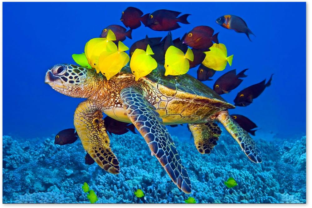 sea-turtle-symbiosis.png