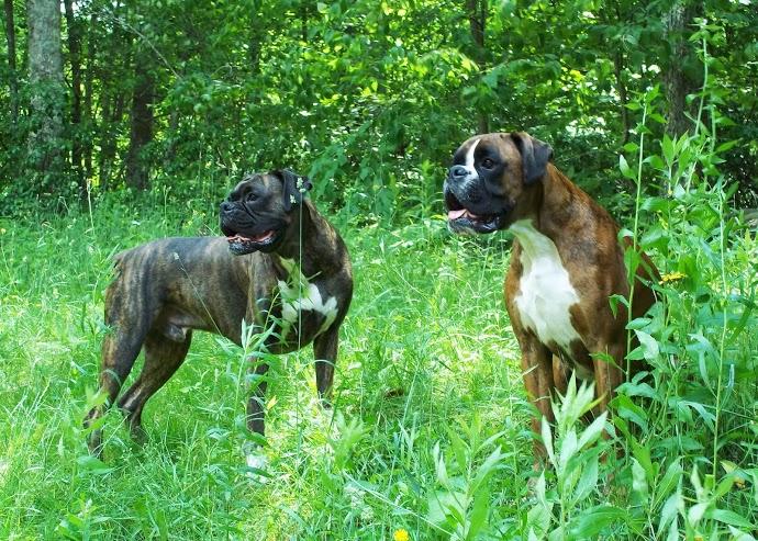 Remi & Rowdy