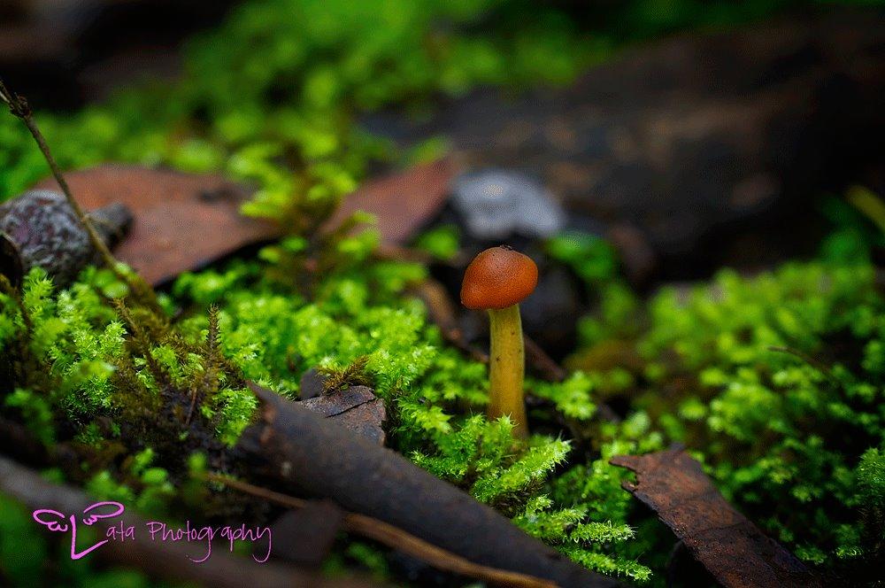 http://lataphotography.com/