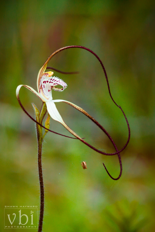 orchids-102.jpg