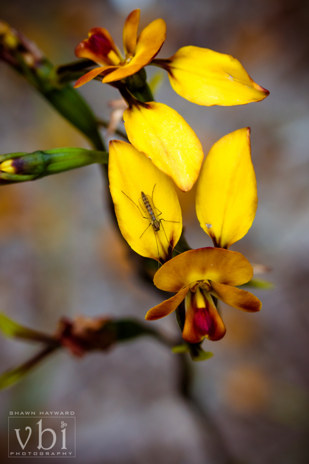 orchids-112.jpg