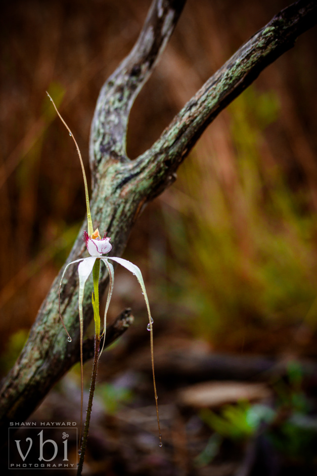 orchids-126.jpg