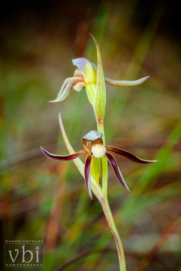 orchids-144.jpg