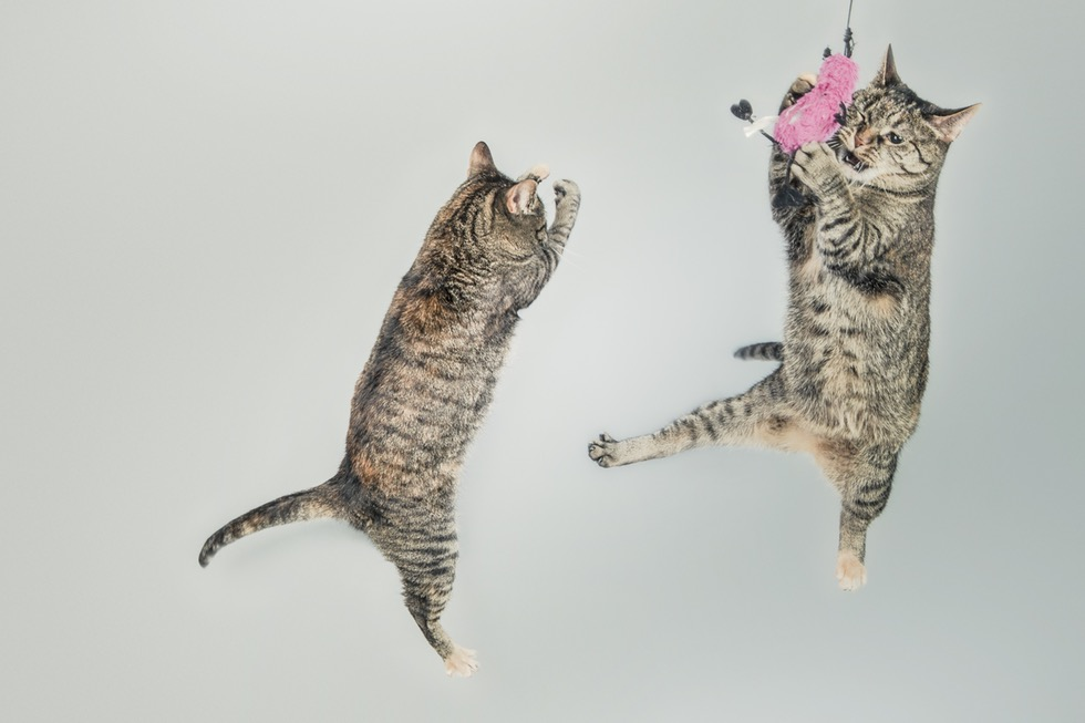 jumping-cute-playing-animals.jpg