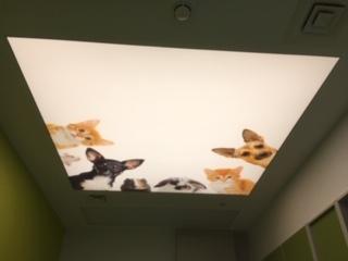 Printed stretch ceiling Craigavon children's hospital