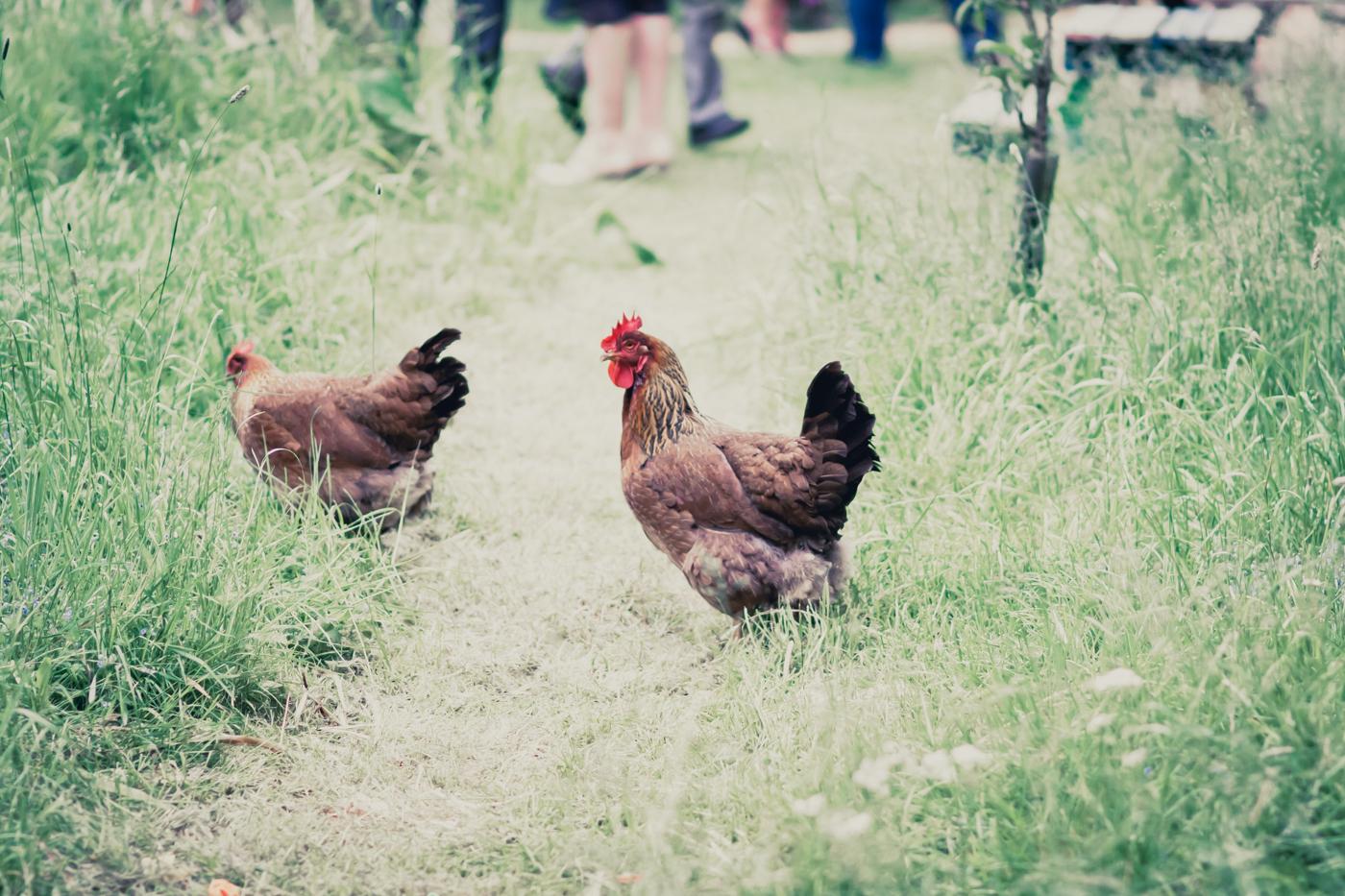217 Keedy and Carl at The Secret Garden in Retford  - Wedding Photography by Mark Pugh www.markpugh.com_.jpg