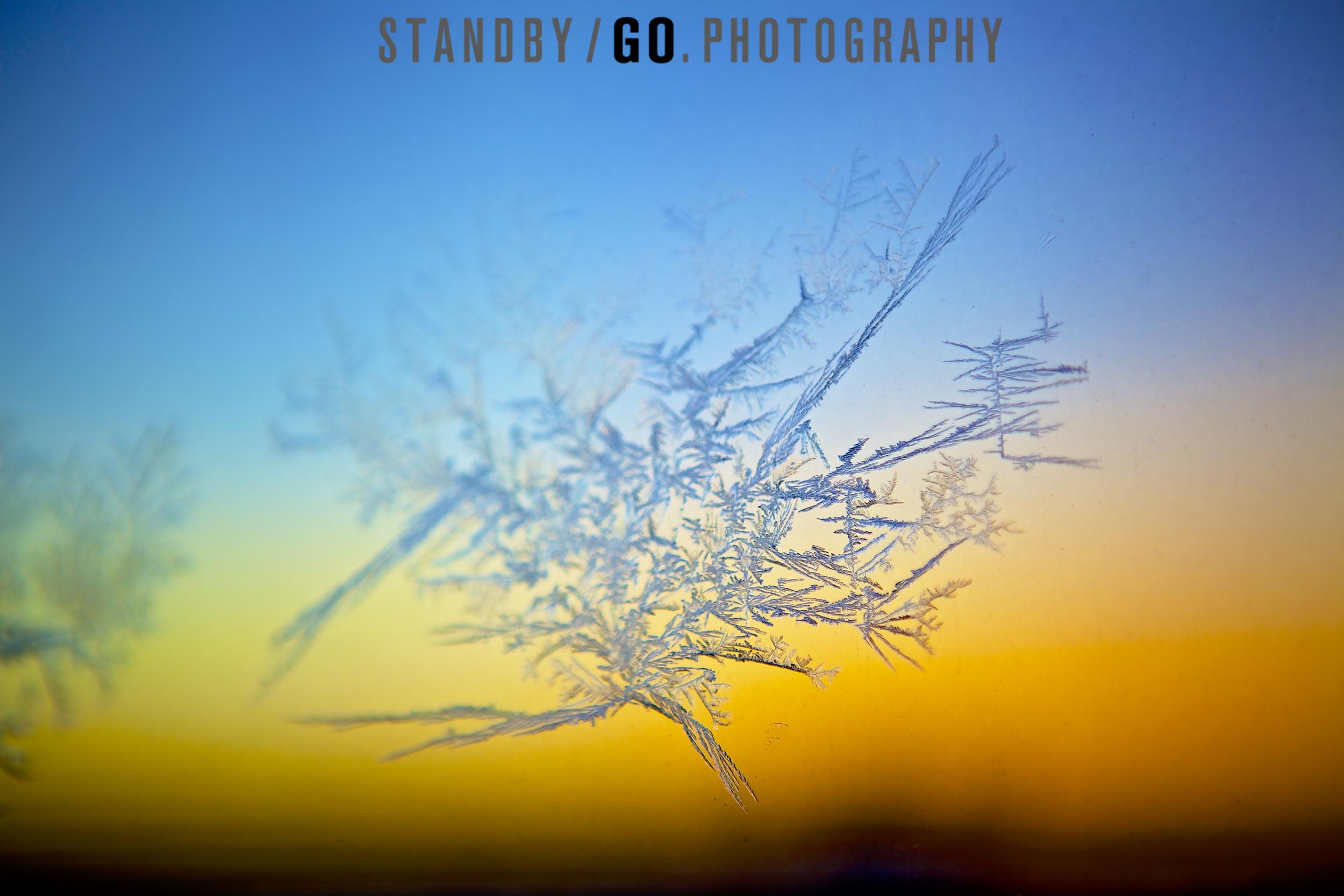 frost_2.jpg