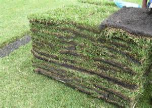 Sod Installation  A perfect lawn not only adds to the beauty of your home but is an important part of your family experience. Planet Plant It, Inc. provides a top quality sod for both residential and commercial projects.