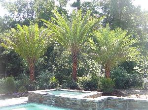 Plant, Tree, Specimen Trees and Palms  Planet Plant It, Inc. takes pride in selecting attractive and healthy plants and trees for your home. We work with general contractors and landscape architects to make sure your residential and commercial project is done right at a fair price and on time.