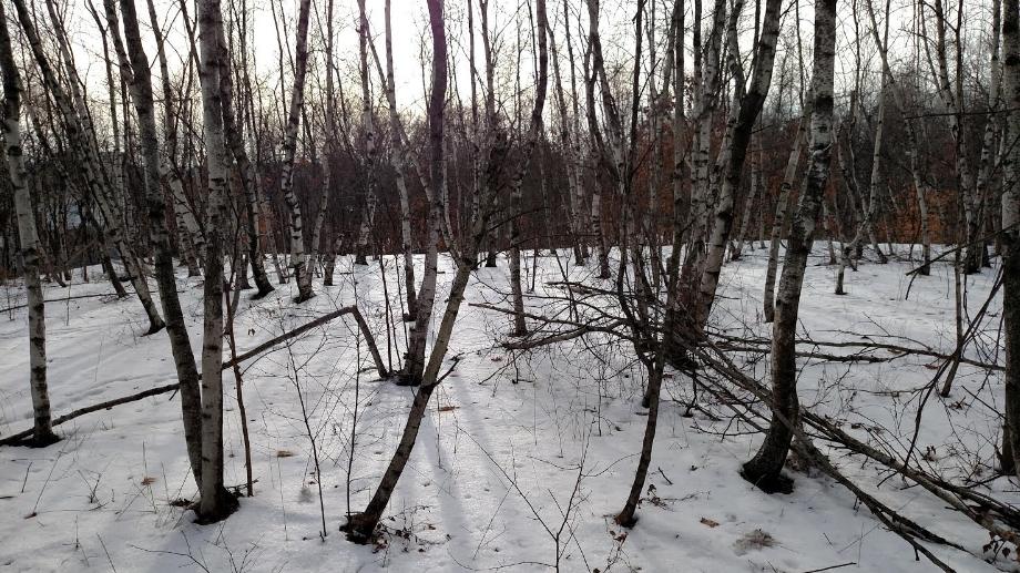 The hinterlands of Blakely and Olyphant buroughs near Scranton, Pennsylvania.    Photo: Nathan F. Elmore (December 23, 2016).
