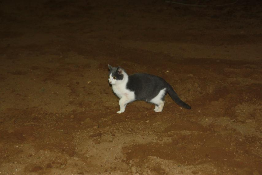 Barn cat! Every time we visit, there's a new kitty to see!