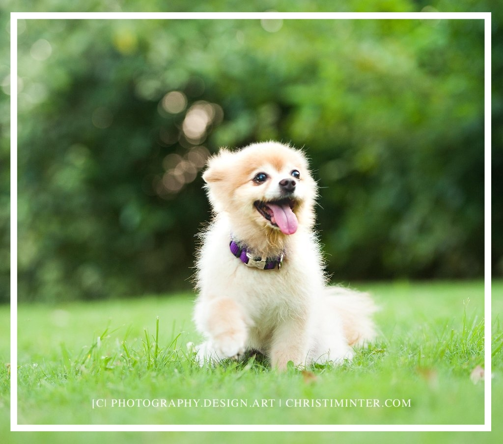 pet+photography+Christi+vibrant+creative+christiminter.com