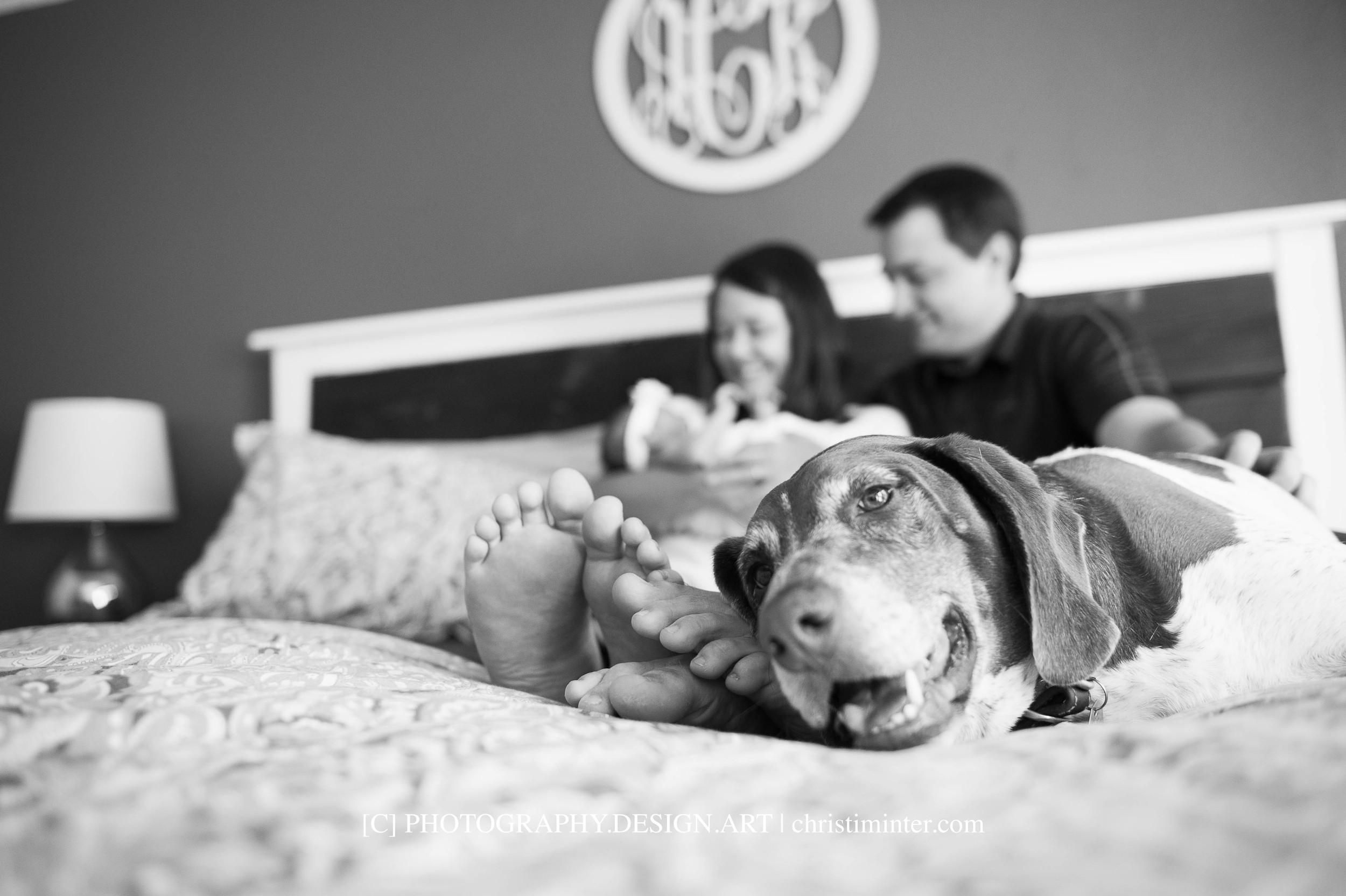 photography+lifestyle+pets+family©christiminter.com