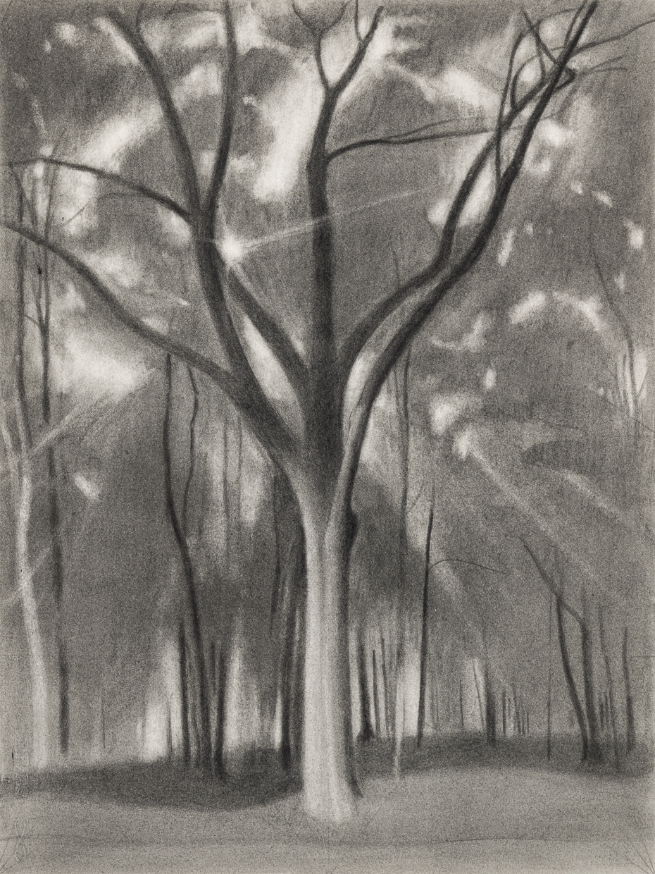 Sun and Oak, 2018 pencil on paper, 18 x 13 1/2 inches      Light Takes the Tree      Drawings     March 11 - April 14, 2019    Opening Reception, Thursday March 11 6 - 8 pm    The New York Studio School   8 West 8 Street  New York, NY 10011  212 673 6466