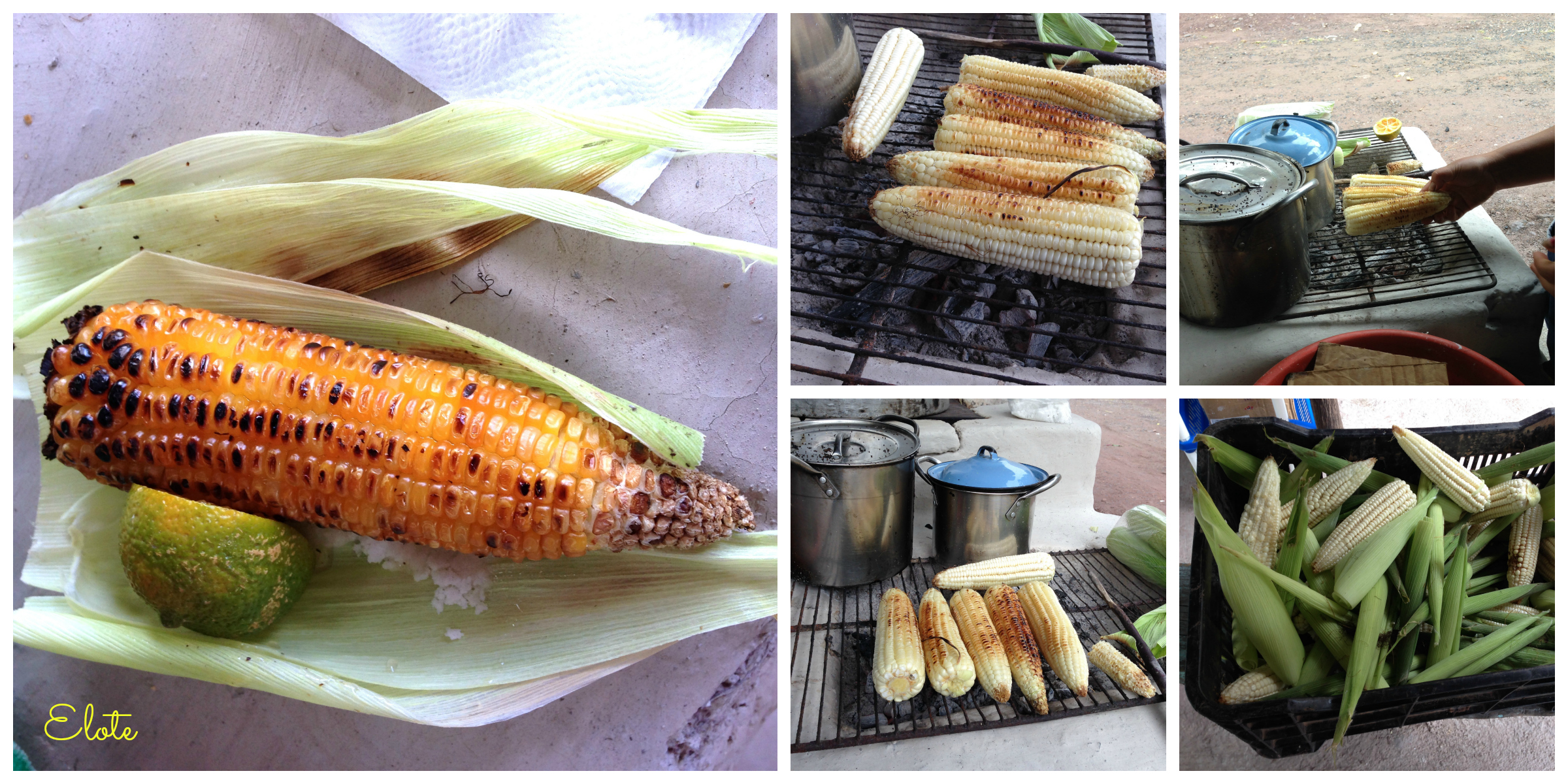 Maize -- Elote -- Corn