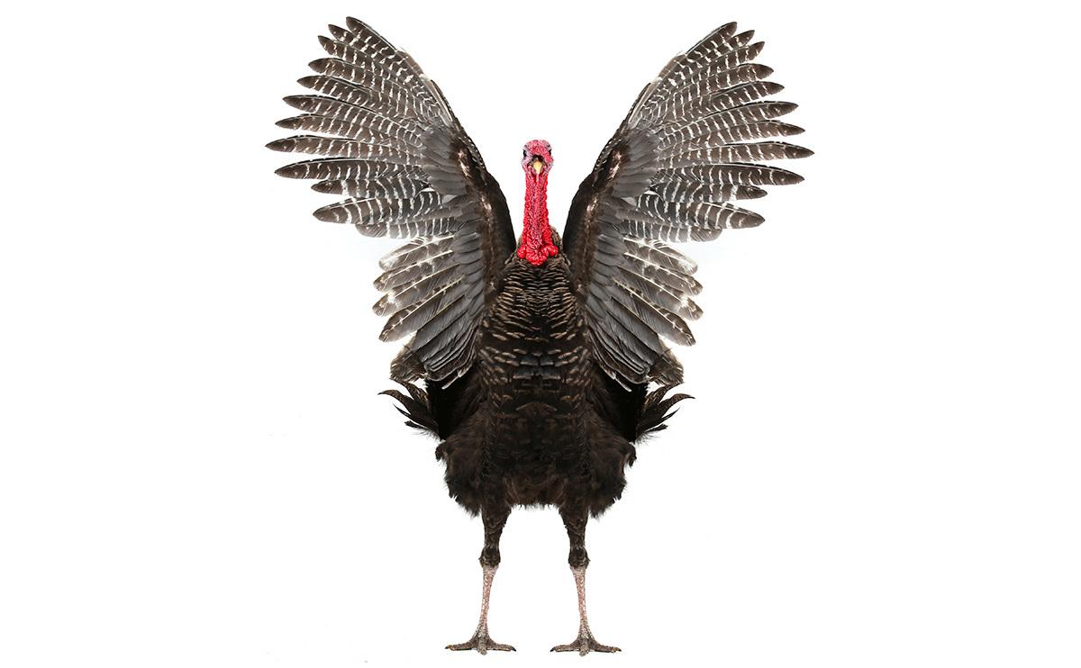 TheObjectStudio_TurkeyHero.jpg