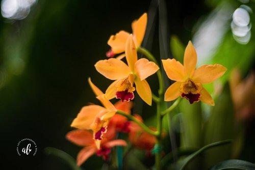 Botanical Garden-Orchid Mania
