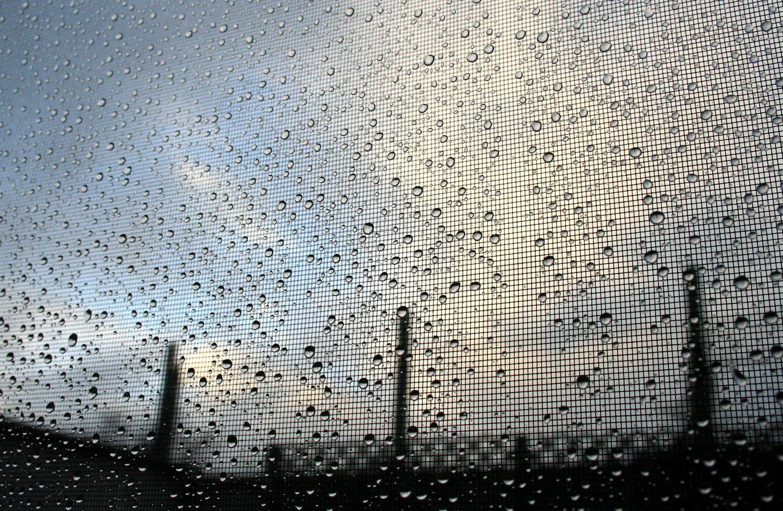 Glory in rain.jpg