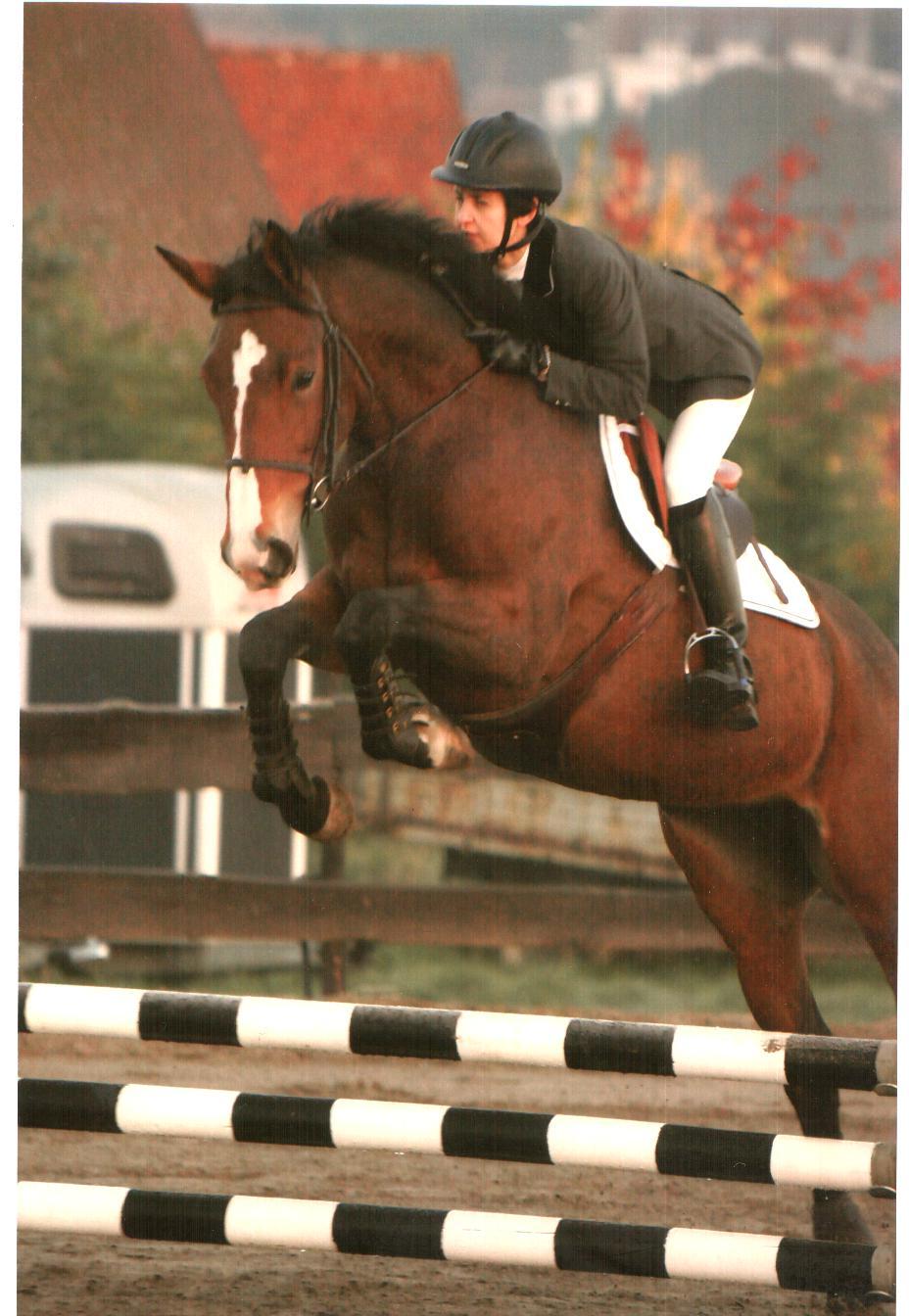 cheval shah foin 4.jpg