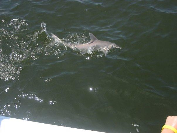 sharkswimming.jpg