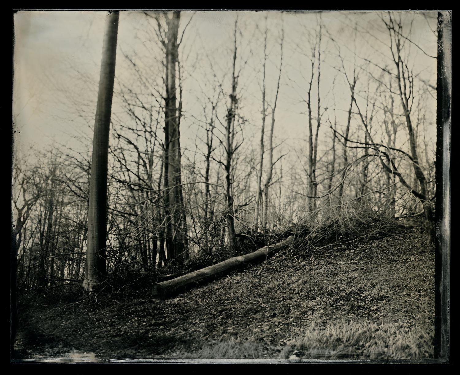 wetplate-scan156.jpg