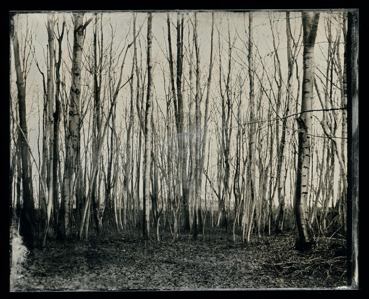 wetplate-scan158.jpg