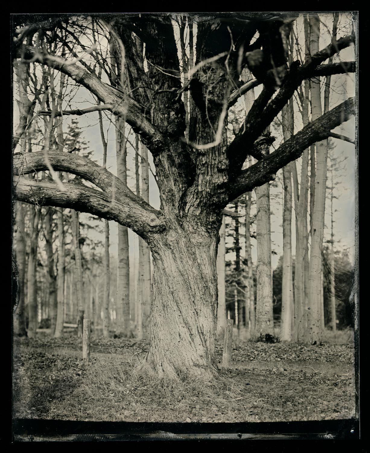 wetplate-scan160.jpg