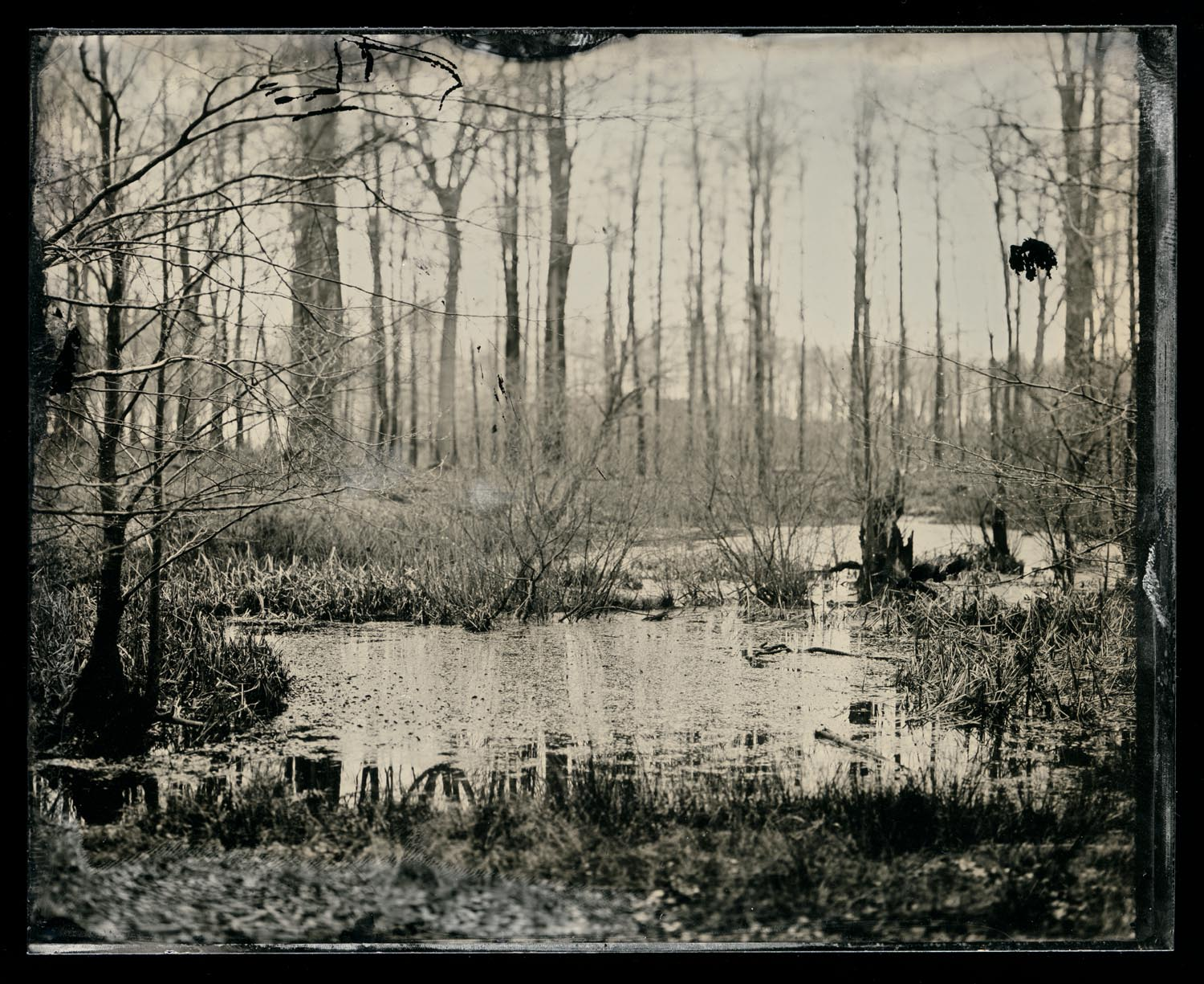 wetplate-scan153.jpg