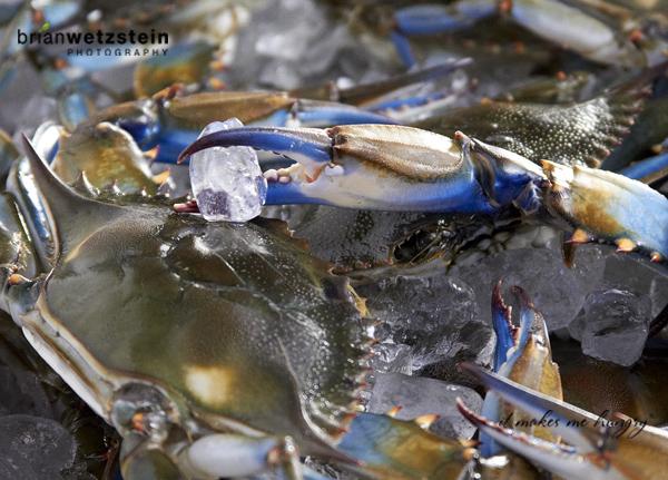 brian-wetzstein-blue-crab-03.jpg