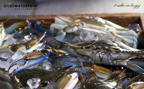 brian-wetzstein-blue-crab-07.jpg