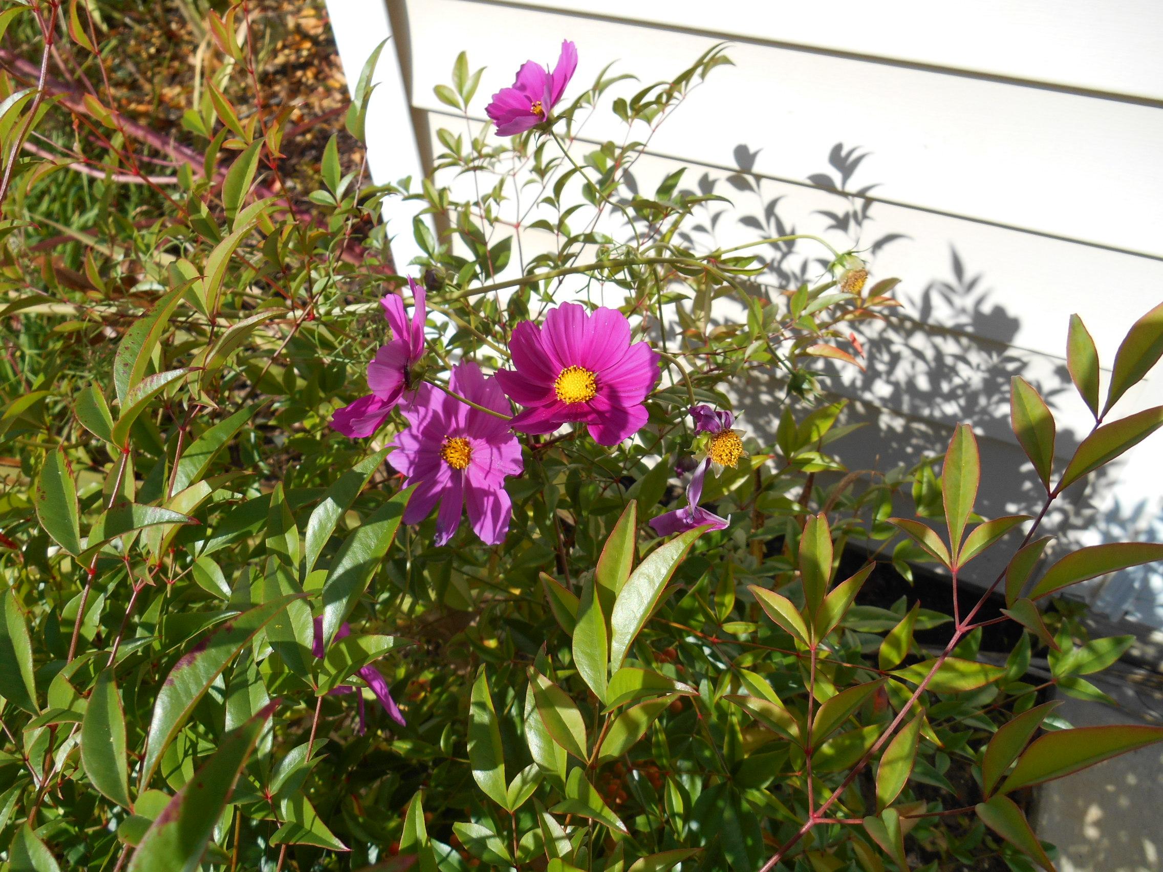 oct 18 flowers 009.JPG
