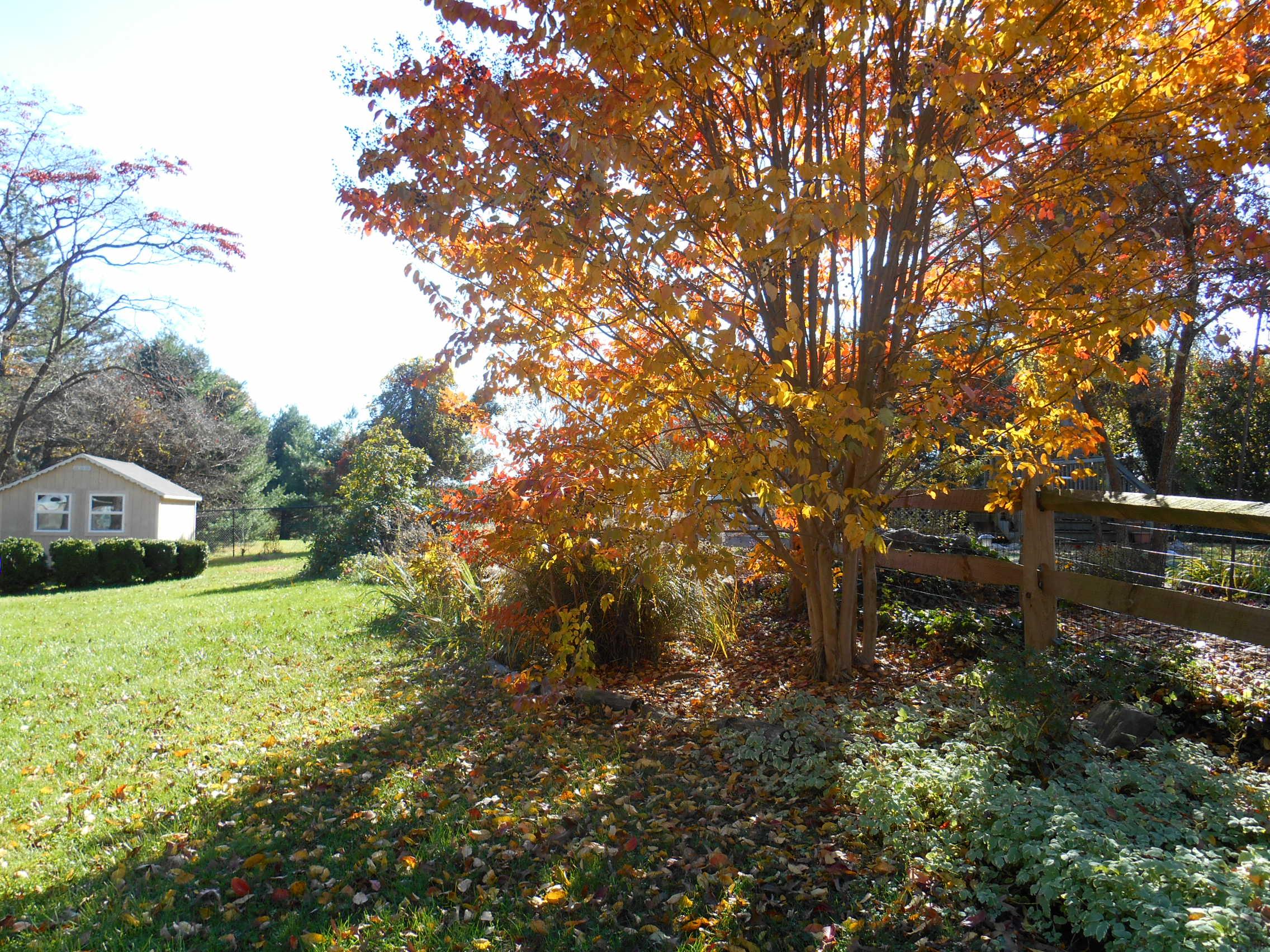 Nov garden color 002.JPG