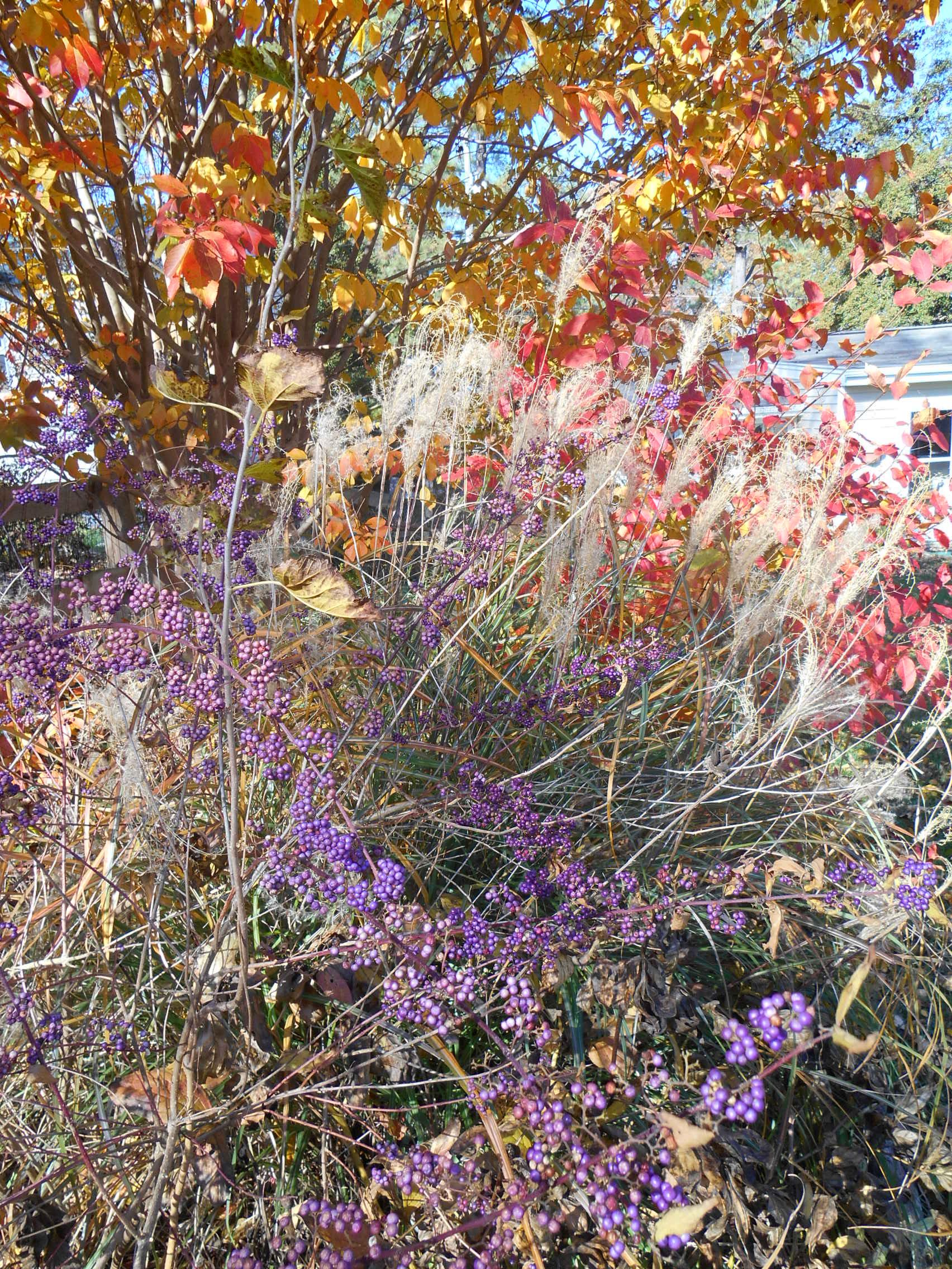 Nov garden color 005.JPG